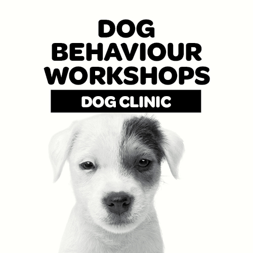 Dog Behaviour Workshop - MTL Vet